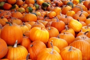 Pumpkin Patches and Corn Mazes near Birmingham